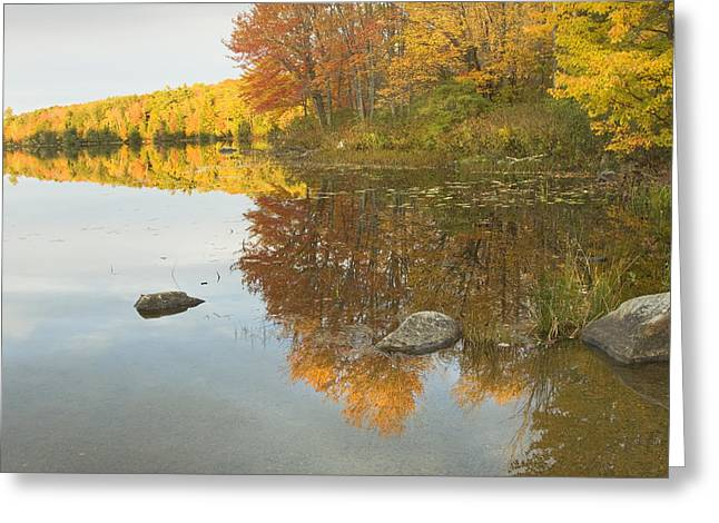 Trees Reflecting In Water Greeting Cards - Fall colors on Taylor Pond Mount Vernon Maine Greeting Card by Keith Webber Jr