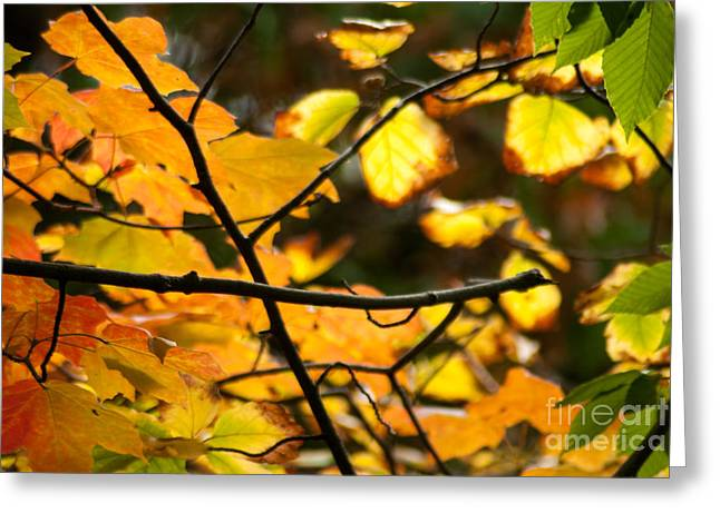 Reflection Harvest Greeting Cards - Fall Colors Greeting Card by Optical Playground By MP Ray