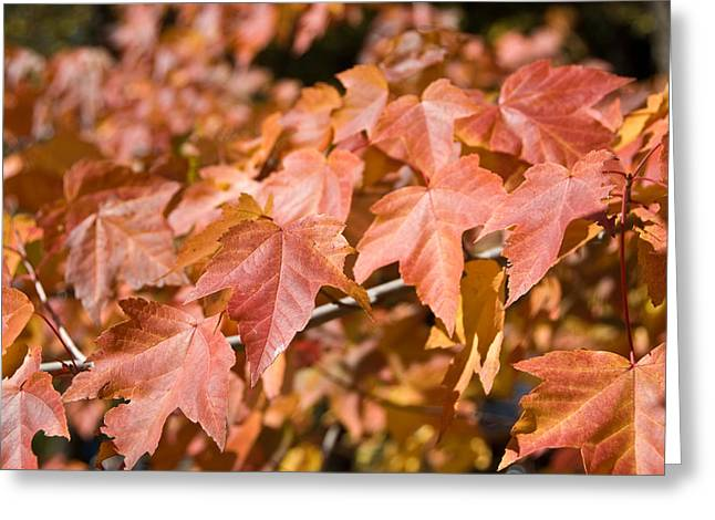 Fall Colors Greeting Card by Shane Kelly