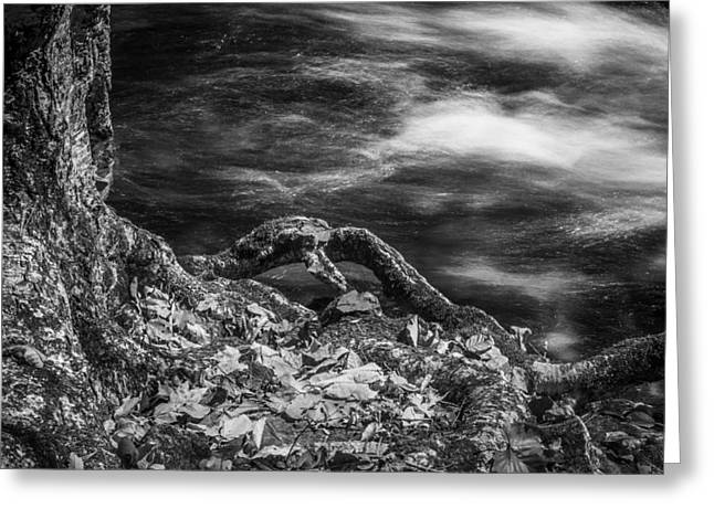 Tree Roots Greeting Cards - Fall Colors Stream Great Smoky Mountains Painted BW Greeting Card by Rich Franco
