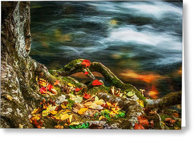 Gatlinburg Tennessee Greeting Cards - Fall Colors Stream Great Smoky Mountains Painted  Greeting Card by Rich Franco