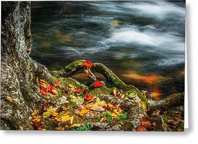 Tree Roots Greeting Cards - Fall Colors Stream Great Smoky Mountains  Greeting Card by Rich Franco