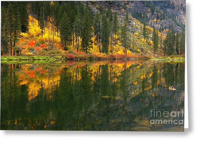 © Beve Brown-clark Greeting Cards - Fall Colors - Tumwater Canyon Greeting Card by Reflective Moments  Photography and Digital Art Images