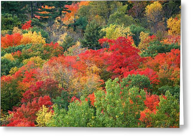 Gatineau Park Greeting Cards - Fall colours in Gatineau Park Quebec Greeting Card by Rob Huntley