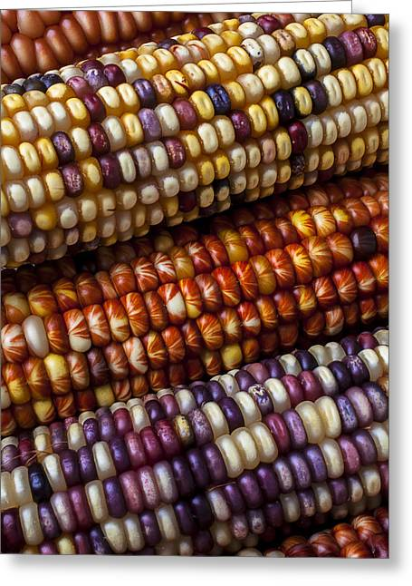 Corn Seeds Greeting Cards - Fall Corn Greeting Card by Garry Gay