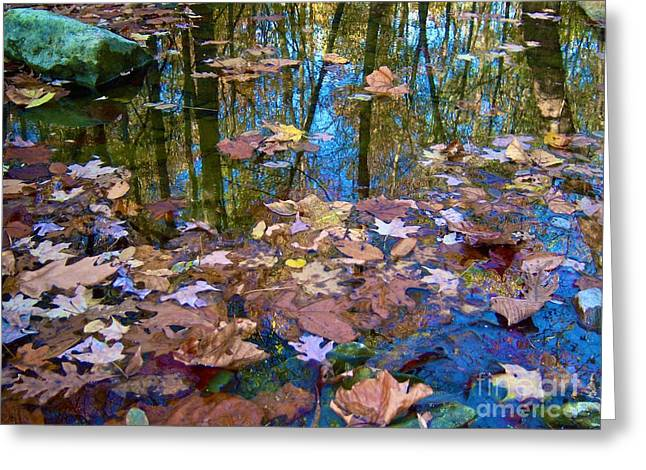 Fallen Leaf On Water Greeting Cards - Fall Creek Greeting Card by Pamela Clements