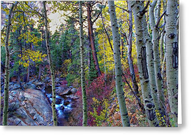 Pentax K-5 Greeting Cards - Fall Creek Greeting Card by Scott McGuire