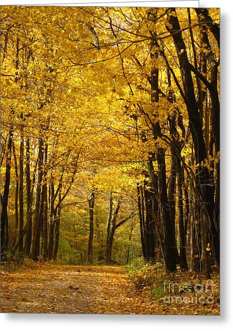 Indiana Autumn Greeting Cards - Fall Greeting Card by Crystal Socha