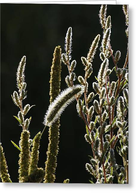 Roxy Greeting Cards - Fall Dew on the Weeds Greeting Card by Roxy Lang