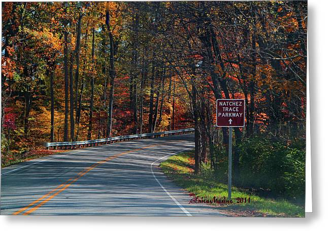 Natchez Trace Parkway Greeting Cards - Fall Drive in Tennessee Greeting Card by EricaMaxine  Price