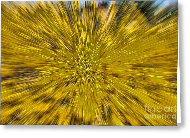 Golden Shower Greeting Cards - Fall Explosion Greeting Card by Paul Ward