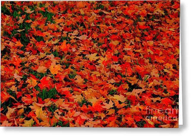 Leaf Peepers Greeting Cards - Fall Fell Greeting Card by Eunice Miller