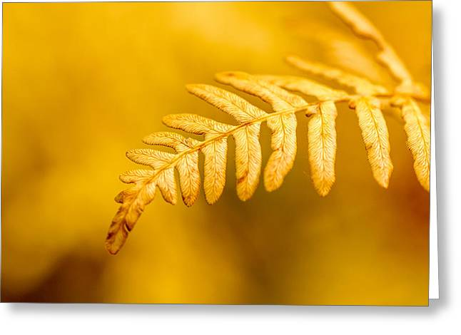 Scenic Drive Greeting Cards - Fall Fern Greeting Card by Teri Virbickis