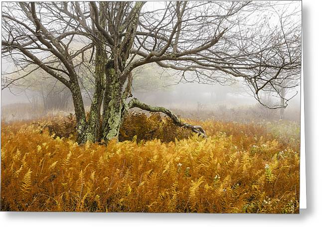 Dolly Sods Wilderness Greeting Cards - Fall Ferns and Fog Greeting Card by Bill Swindaman