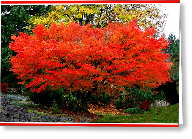 """flora Prints"" Greeting Cards - Fall Fire Greeting Card by John Langdon"