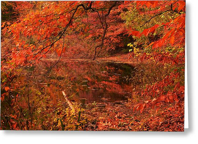 Red Maple Trees Greeting Cards - Fall Flavor Greeting Card by Lourry Legarde