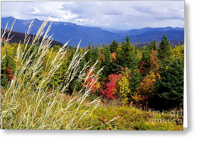 Newengland Greeting Cards - Fall Foliage 2 Greeting Card by Kerri Mortenson
