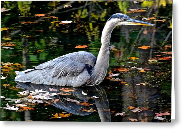 Dazzling Blue Greeting Cards - Fall Foliage and Fowl Greeting Card by Frozen in Time Fine Art Photography