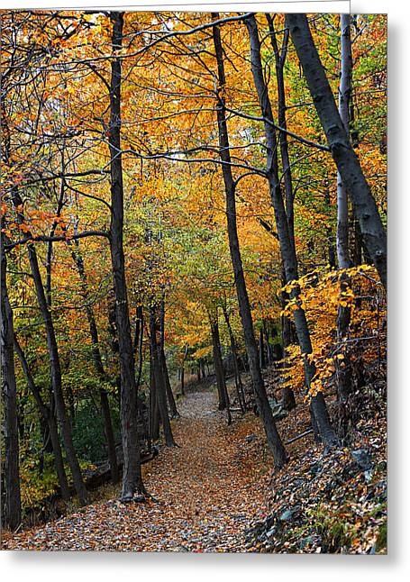 Red Fallen Leave Photographs Greeting Cards - Fall Foliage Colors 03 Greeting Card by Metro DC Photography