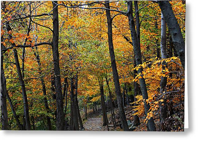 Fall Foliage Colors 03 Greeting Card by Metro DC Photography