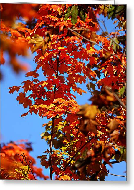 Fall Foliage Colors 15 Greeting Card by Metro DC Photography