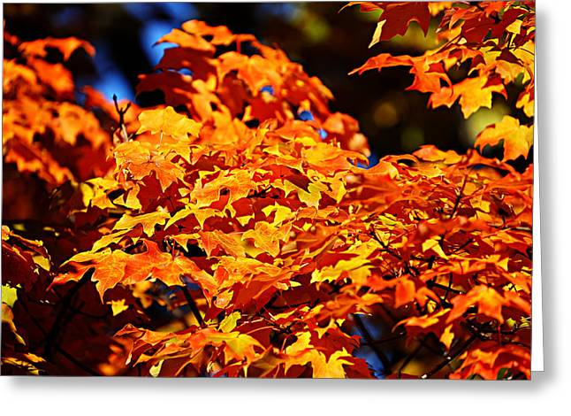 Fall Foliage Colors 16 Greeting Card by Metro DC Photography