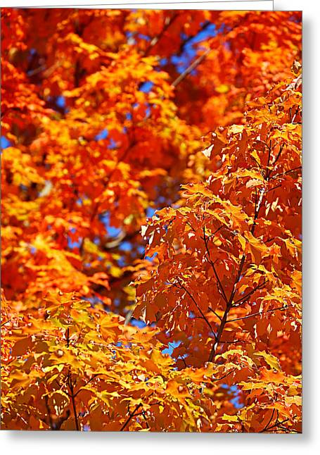 Foliage Photographs Greeting Cards - Fall Foliage Colors 17 Greeting Card by Metro DC Photography
