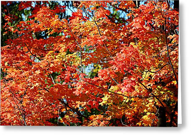 Fall Foliage Colors 22 Greeting Card by Metro DC Photography