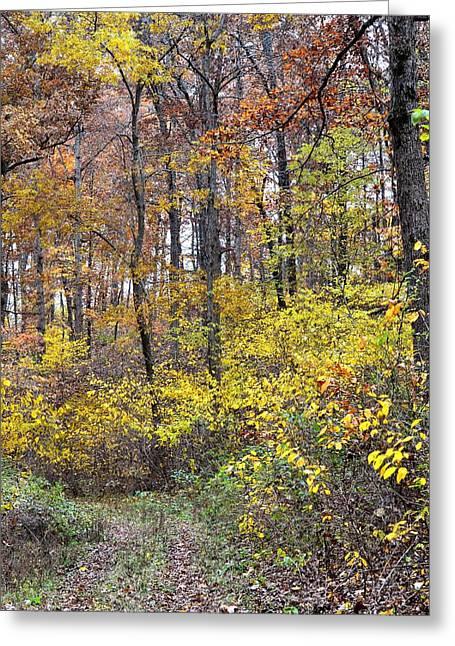 Woodland Scenes Greeting Cards - Fall Foliage Greeting Card by Deena Stoddard