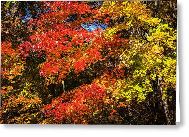 Gatlinburg Tennessee Greeting Cards - Fall Foliage Great Smoky Mountains  Greeting Card by Rich Franco