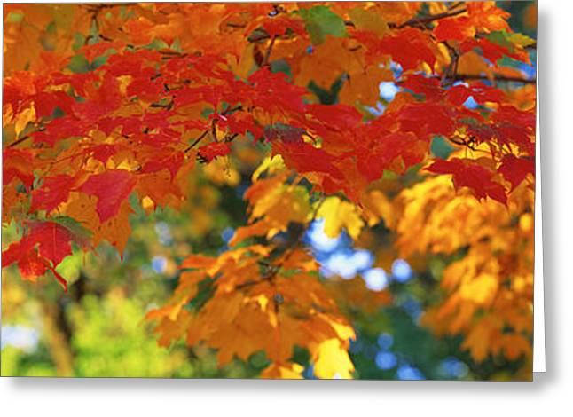 Leaf Change Greeting Cards - Fall Foliage, Guilford, Baltimore City Greeting Card by Panoramic Images