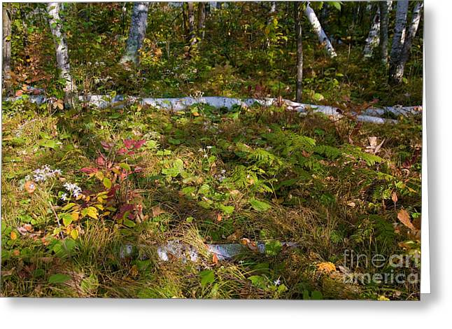 Forest Floor Greeting Cards - Fall Foliage Greeting Card by Linda Freshwaters Arndt