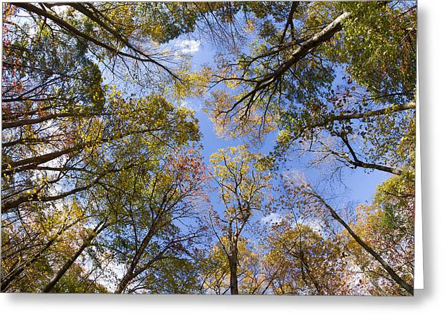 One Point Perspective Greeting Cards - Fall Foliage - Look Up 2 Greeting Card by Kirkodd Photography Of New England