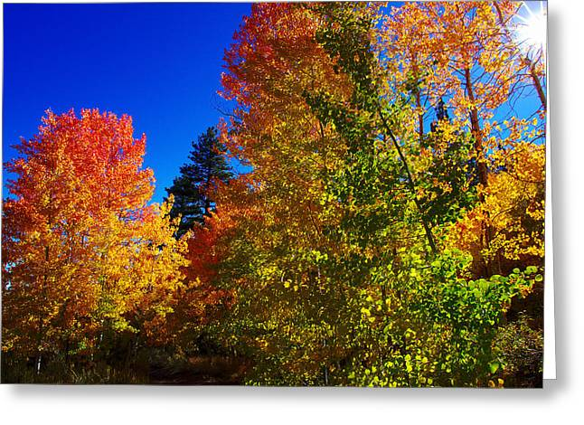 Pentax K-5 Greeting Cards - Fall Foliage Palette Greeting Card by Scott McGuire