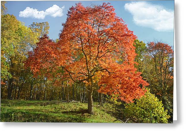 Buy Photos Online Greeting Cards - Fall Foliage Greeting Card by Steven  Michael