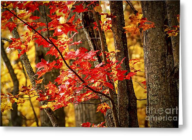 Turning Leaves Photographs Greeting Cards - Fall forest detail Greeting Card by Elena Elisseeva