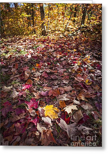 Fall Forest Floor  Greeting Card by Elena Elisseeva