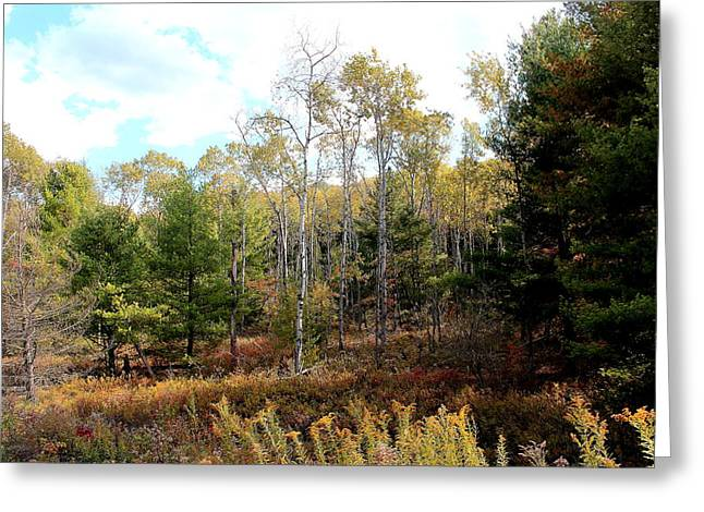 Subtle Colors Greeting Cards - Fall Forest Meadow Greeting Card by Brian Lucia