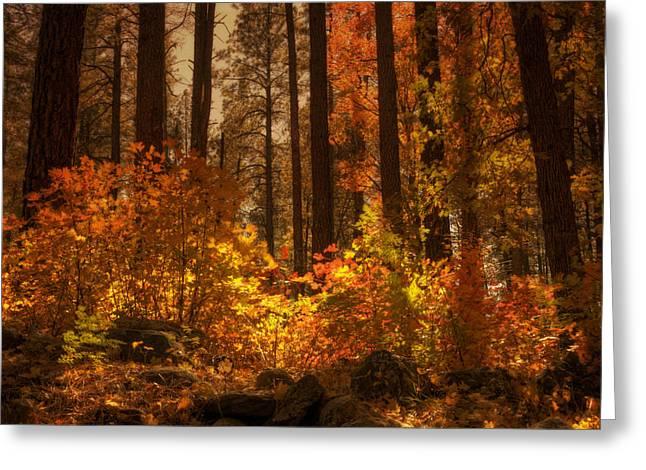 Fall Forest  Greeting Card by Saija  Lehtonen