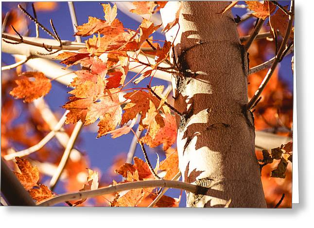 Red Fallen Leave Photographs Greeting Cards - Fall Forever Greeting Card by Gloria Pasko