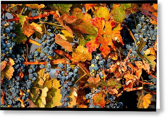 Grape Vineyard Greeting Cards - Fall Grapes Dining Room Art Greeting Card by Carol Groenen
