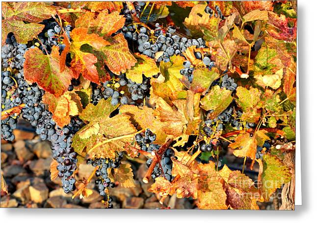 Grape Leaf Greeting Cards - Fall Grapes Greeting Card by Carol Groenen