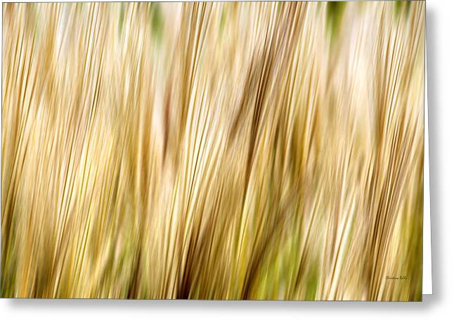 Golden Brown Greeting Cards - Fall Grass Abstract Greeting Card by Christina Rollo