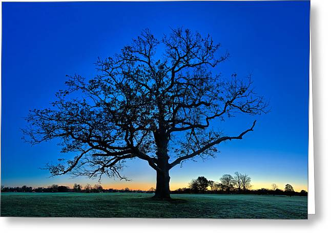 Misty Greeting Cards - Fall Great Oak at Dawn Greeting Card by Chris Bordeleau