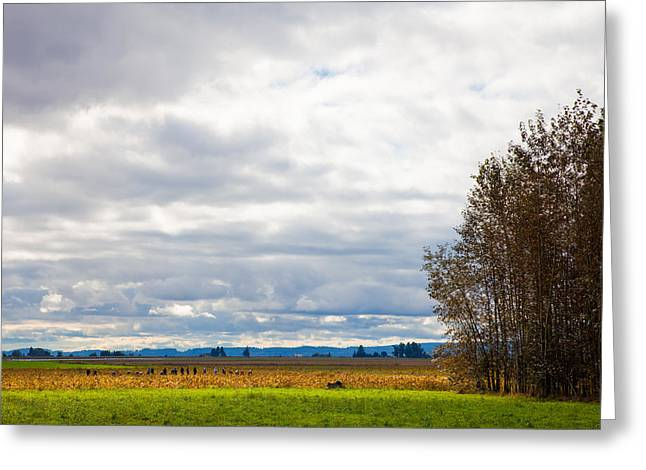 Field Workers Greeting Cards - Fall harvest in Mount Vernon Washington Greeting Card by David Patterson