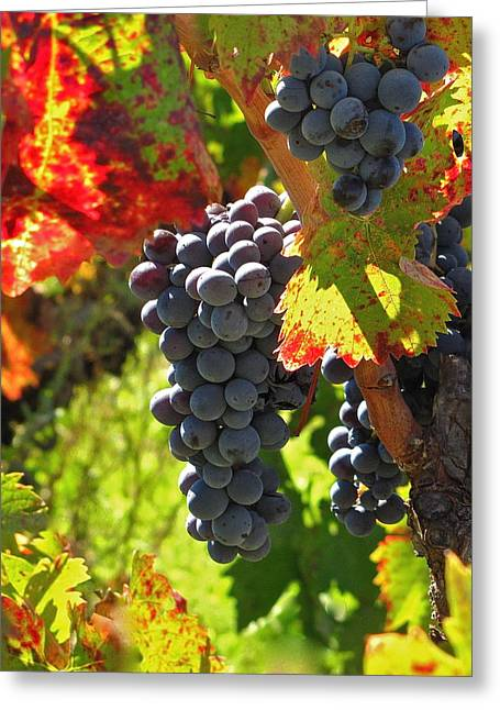Wine Tour Greeting Cards - Fall Harvest Greeting Card by Ray R Morawski