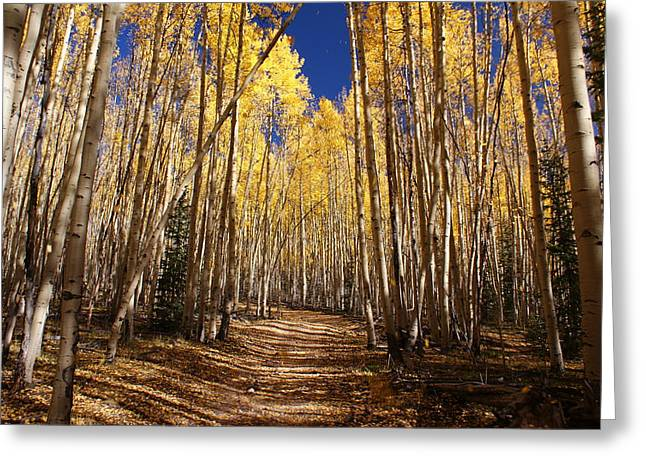 Aspen Trees Greeting Cards - Fall Hike in the Aspens Greeting Card by Michael J Bauer