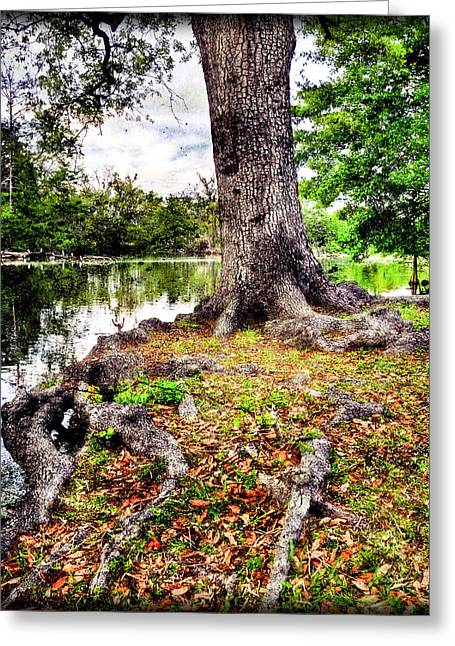Fall In Audubon Park Greeting Card by Ray Devlin