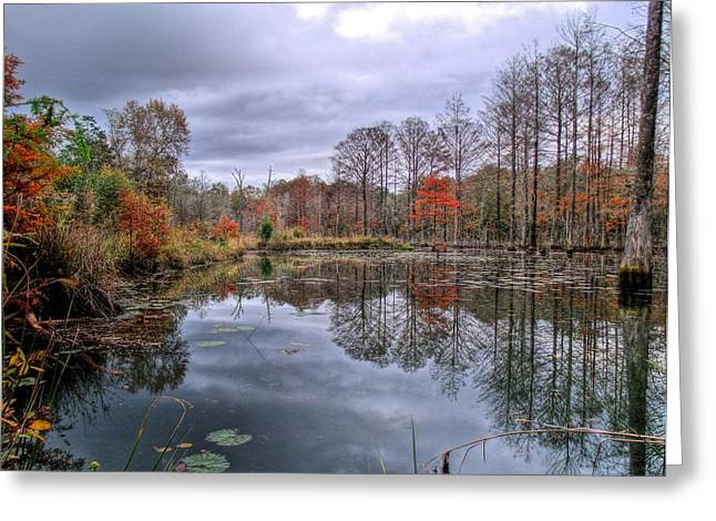 Swamp People Greeting Cards - Fall in Gator Country Greeting Card by JC Findley