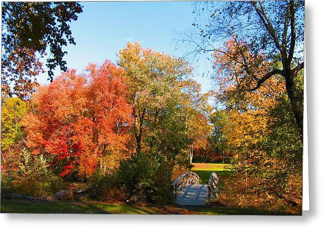 Fallscape Greeting Cards - Fall in Lakewood Greeting Card by Roger Becker